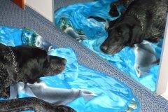 Pes-ohar-01-Don-a-zrcadlo