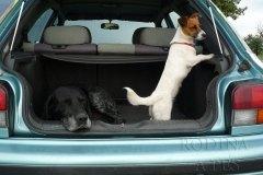 Don - ohař, pes