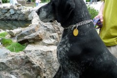 Don v ZOO Praha - ohař, pes